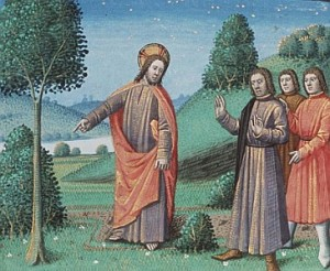 parable-fig-tree
